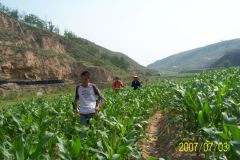 China corn field survey