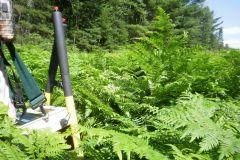Tall fern survey