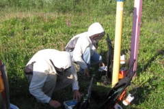 Alyeska survey alaska in mosquito season