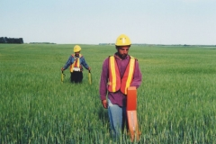 Wheat field survey canada